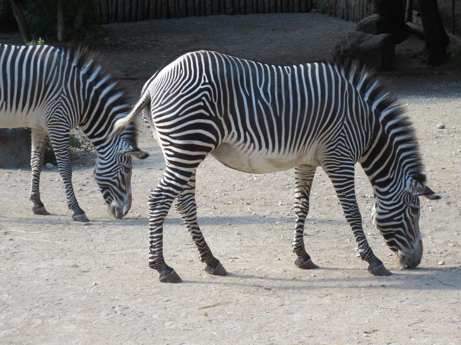 Parc zoologique et botanique